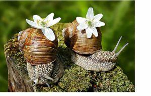милые создания в инет